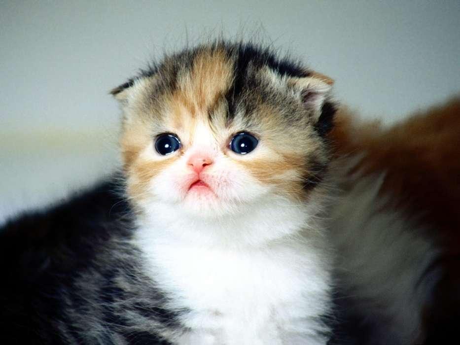 миниатюрная картинка самого милого котика осуществляется