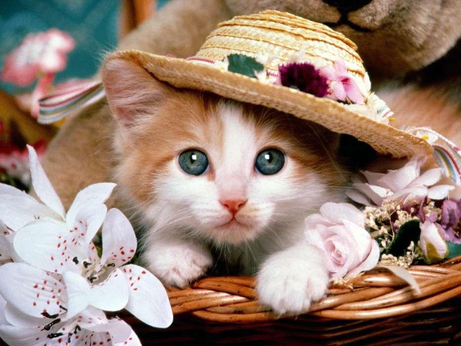Картинки кошки красивые смешные