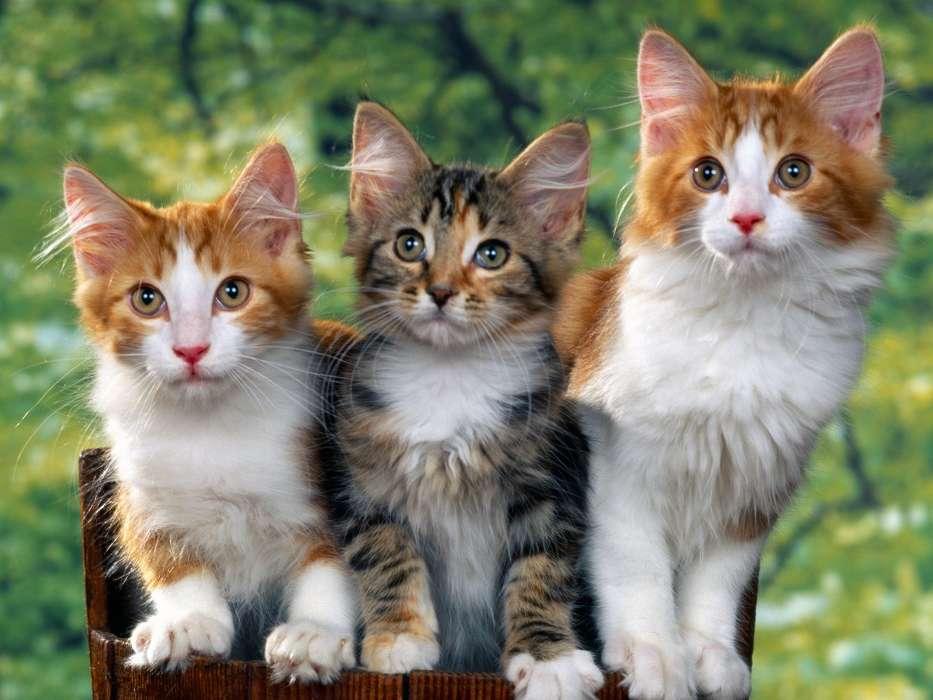 Картинка животного кошку