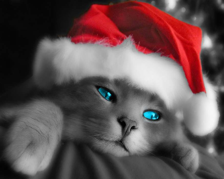 Download mobile wallpaper Holidays, Animals, Cats, New Year, Christmas, Xmas for free.
