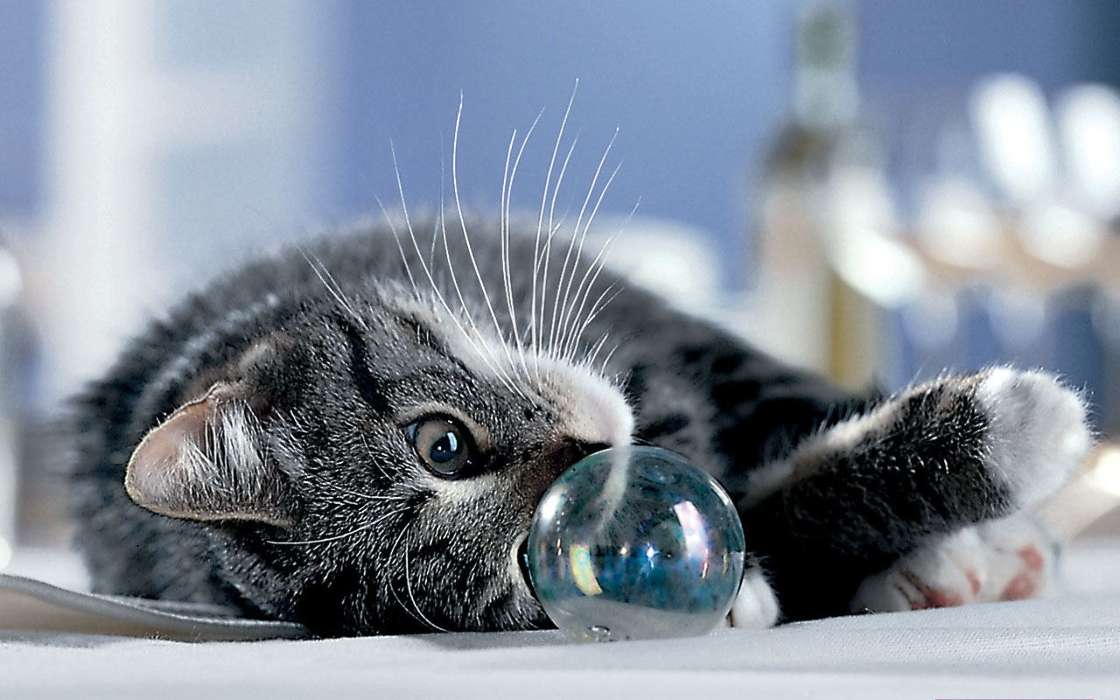 Download mobile wallpaper Animals, Cats, Bubbles for free.