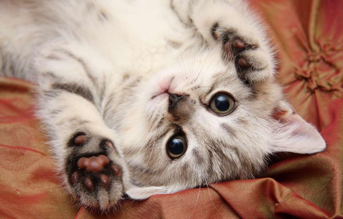 Дети, прикольные картинки на аву котят