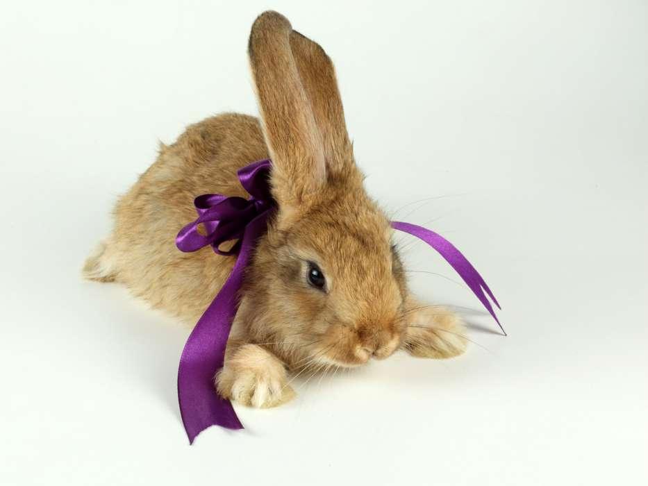 Descargar La Imagen En Teléfono: Animales, Conejos