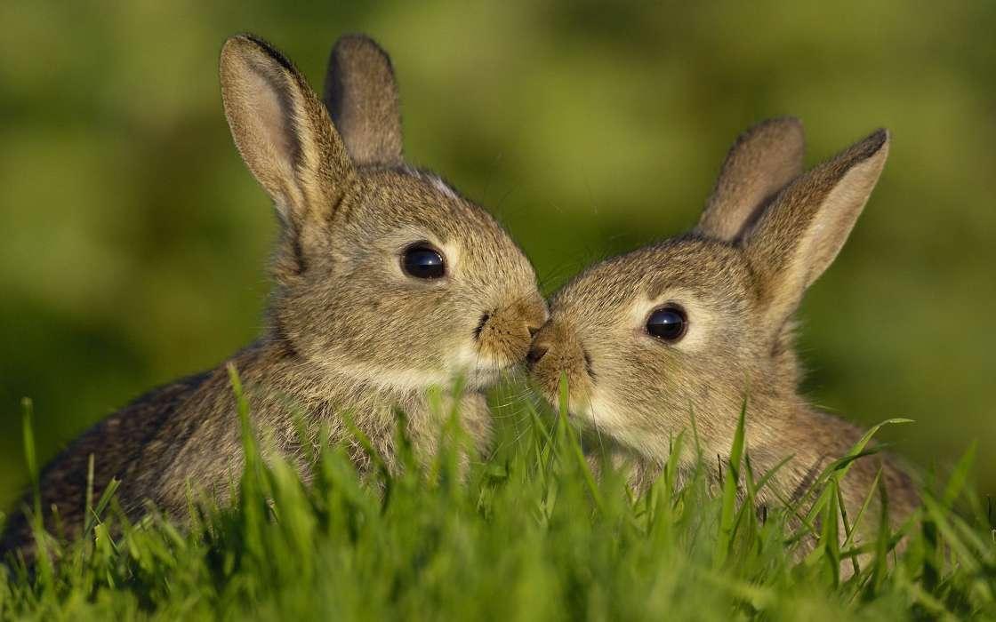Картинки чтобы, картинки зайчатами
