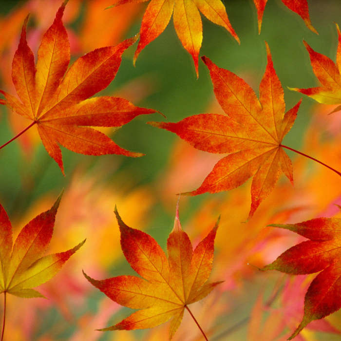Download mobile wallpaper Autumn, Leaves, Objects for free.