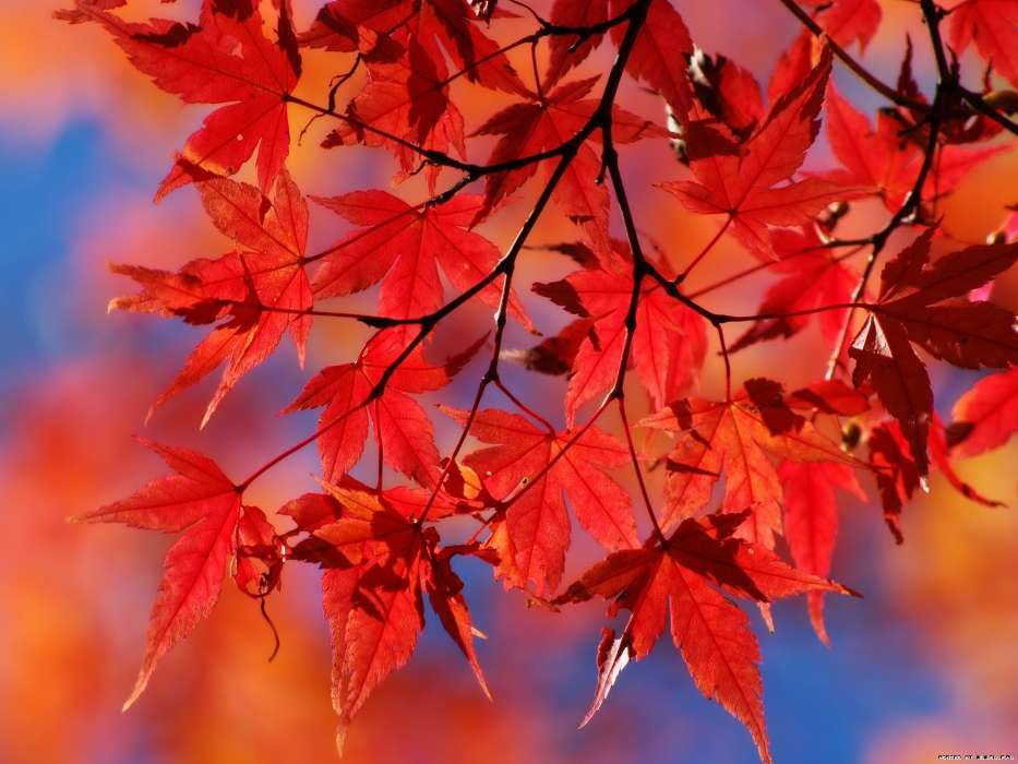 Download mobile wallpaper Plants, Autumn, Leaves for free.