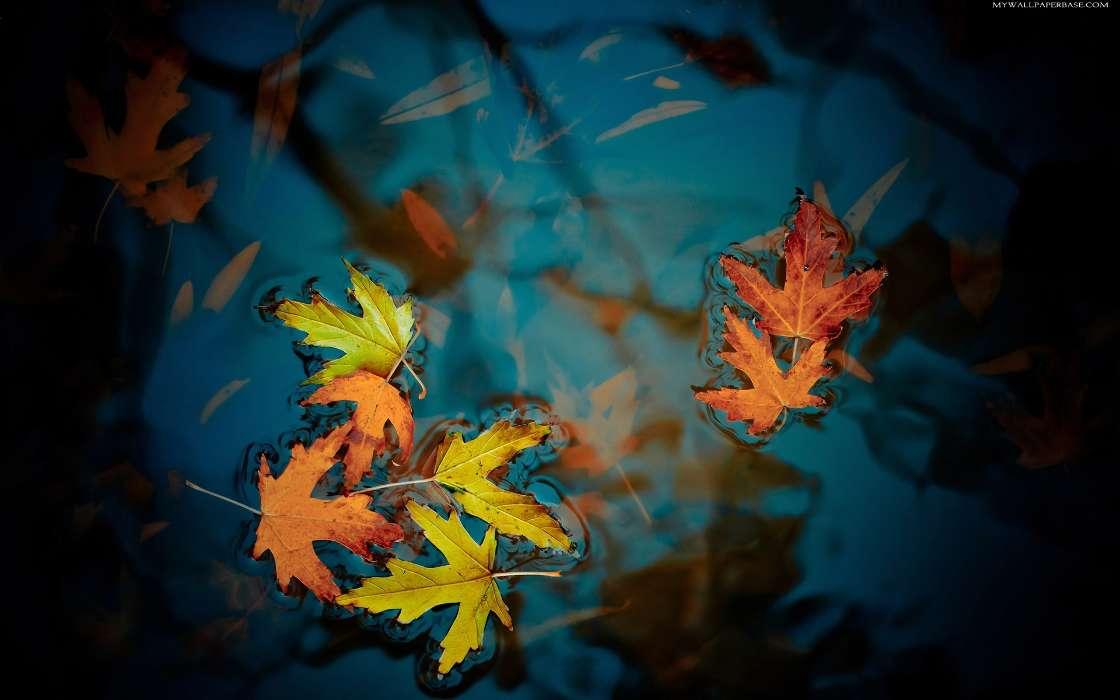 Descargar la imagen en tel fono plantas agua oto o - Descargar autumn leaves ...