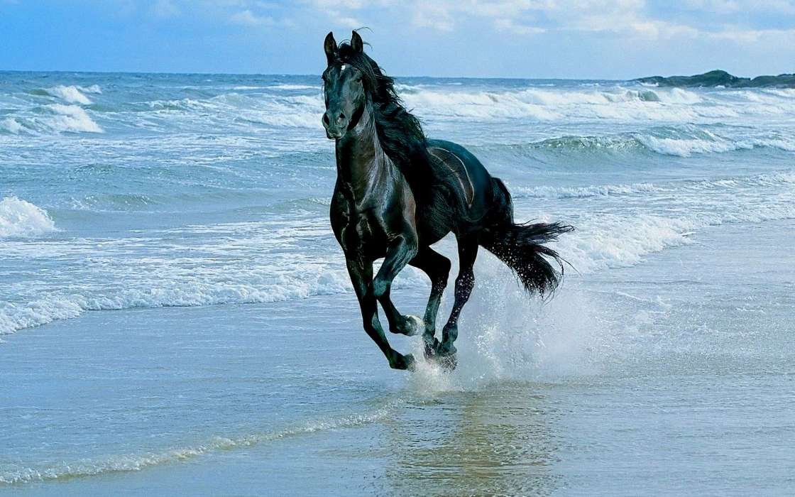 Download mobile wallpaper Animals, Horses, Sea, Waves for free.