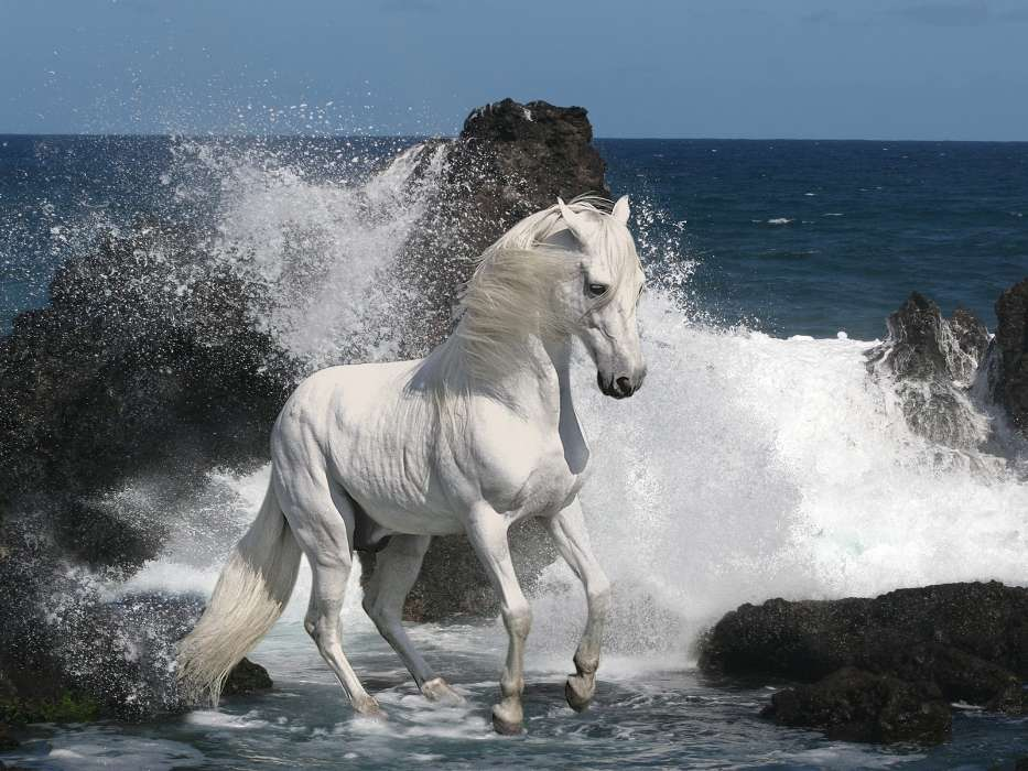 Download mobile wallpaper Animals, Horses, Sea for free.