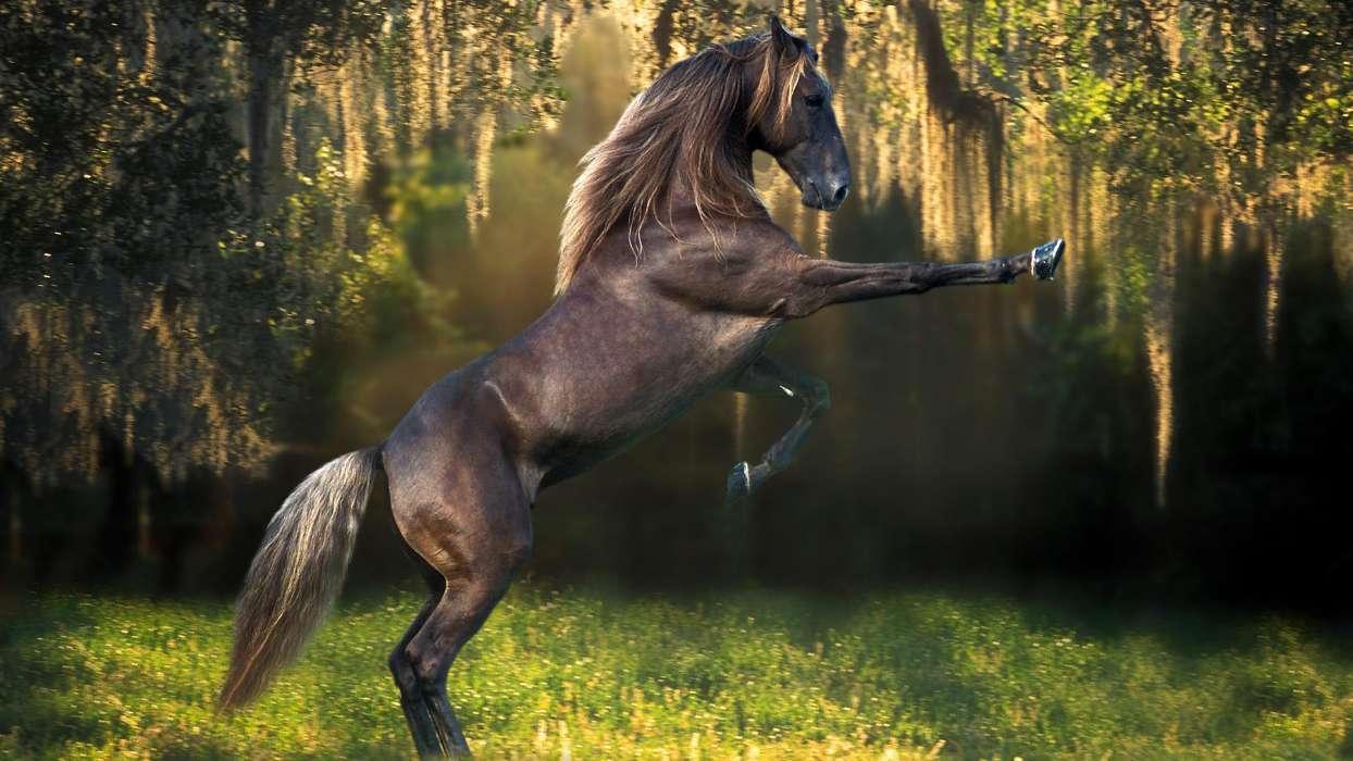 Download Bilder für das Handy: Tiere, Pferde, kostenlos. 27032