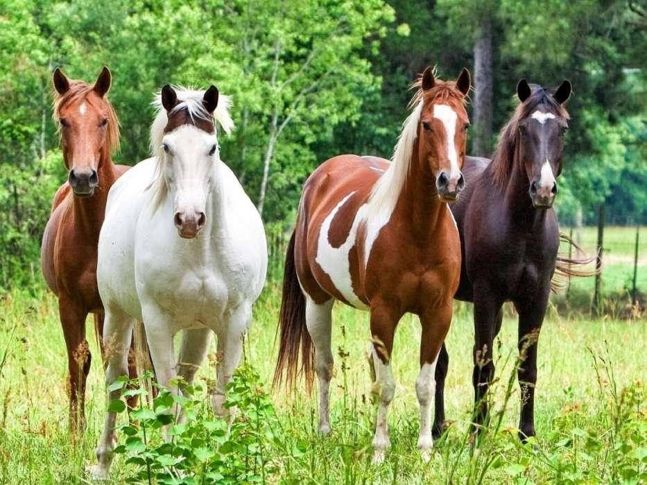 bildschirmschoner pferde