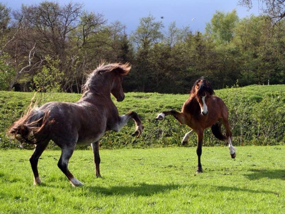 часто картинки конь танцует белого дома уходит