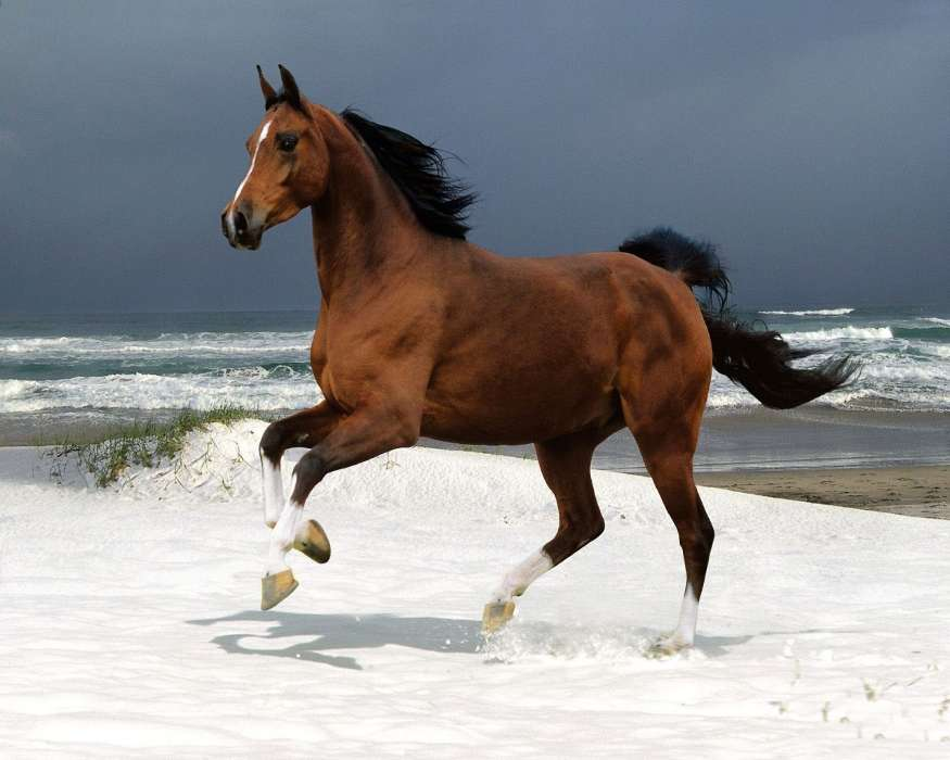 лошадь скачать картинка
