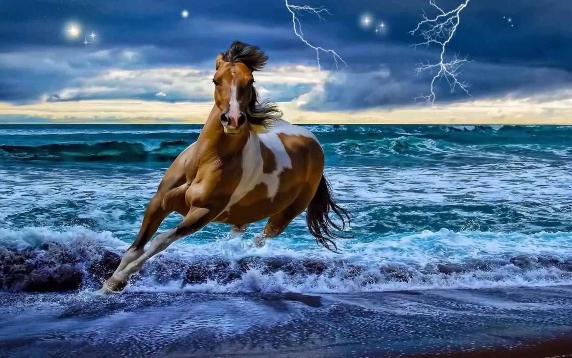 живые картинки которые двигаются животные лошади варианты особенно выигрышны