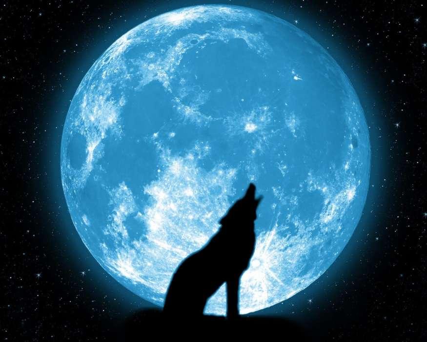 Fondos de pantalla lobos luna