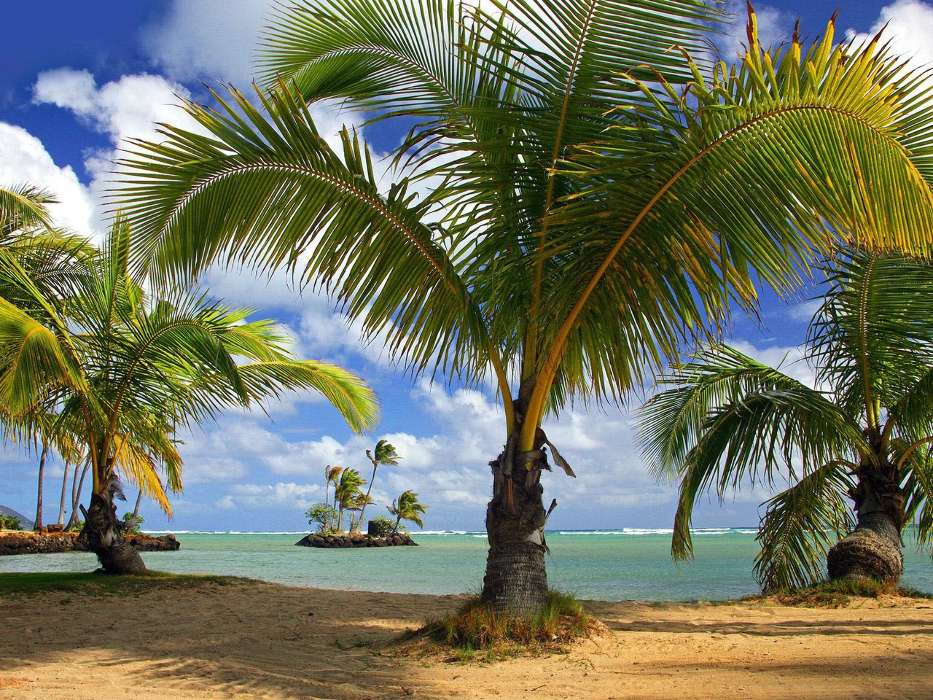 Download mobile wallpaper Landscape, Nature, Sea, Beach, Palms for free.