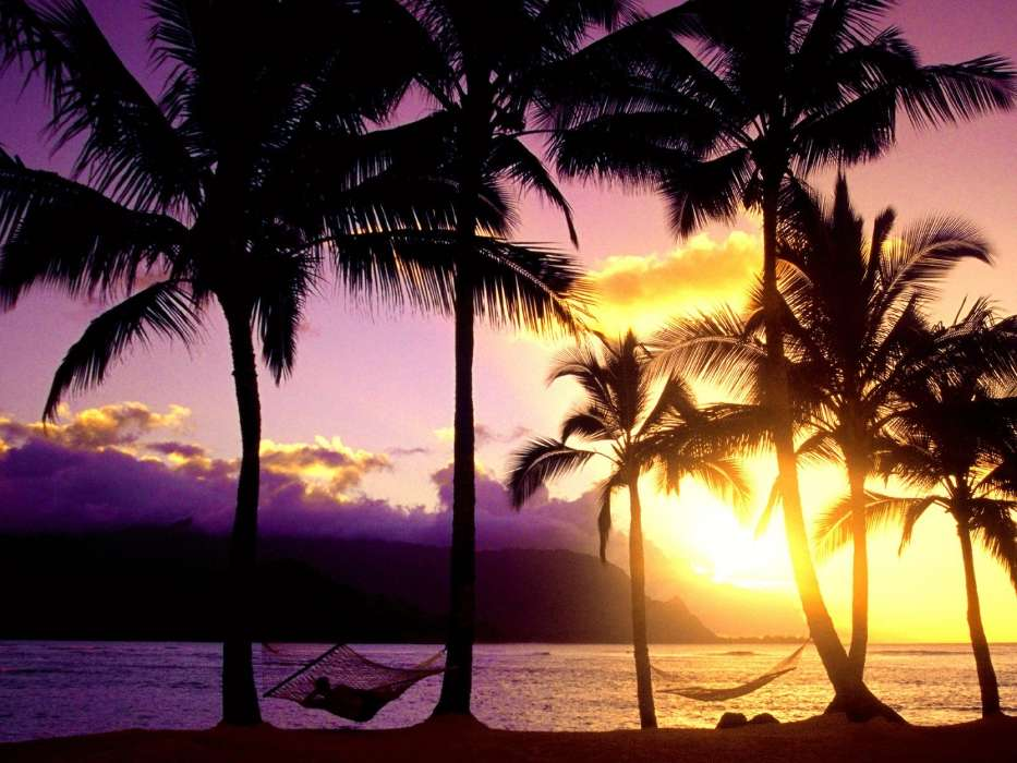 Download mobile wallpaper Landscape, Nature, Sunset, Sea, Palms for free.