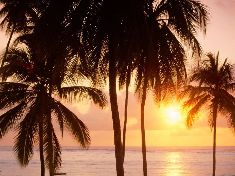 Download mobile wallpaper Landscape, Sunset, Sea, Palms for free.
