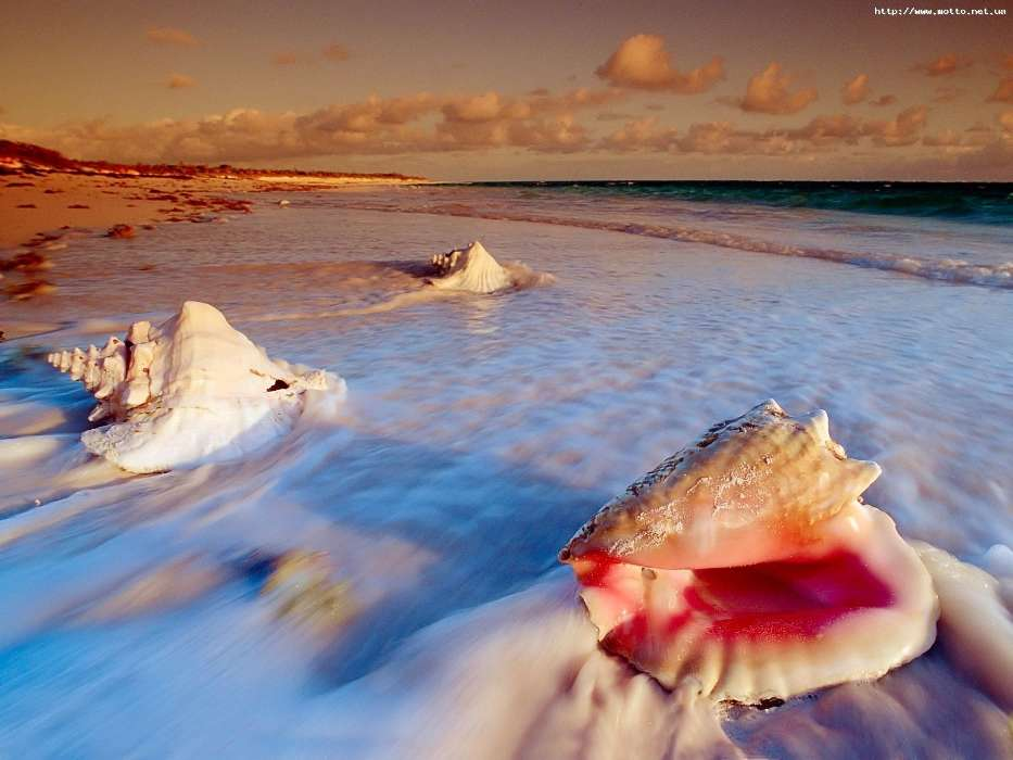 Download mobile wallpaper Landscape, Water, Sea, Beach, Shells for free.