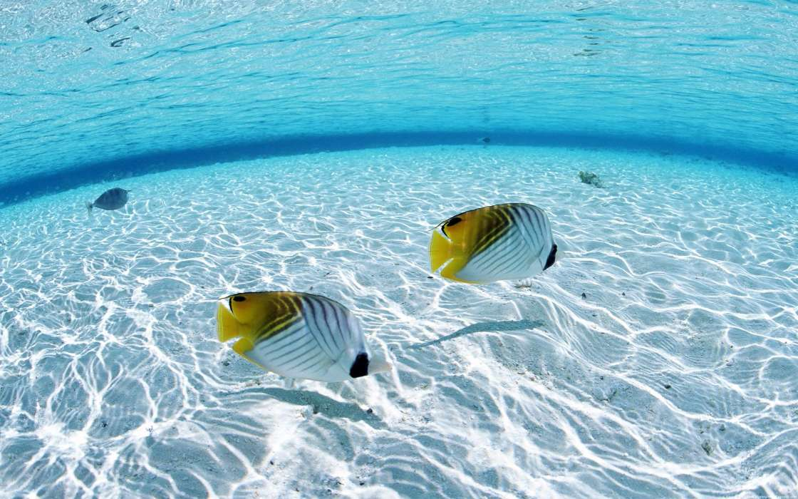 Download mobile wallpaper Animals, Landscape, Sea, Fishes for free.