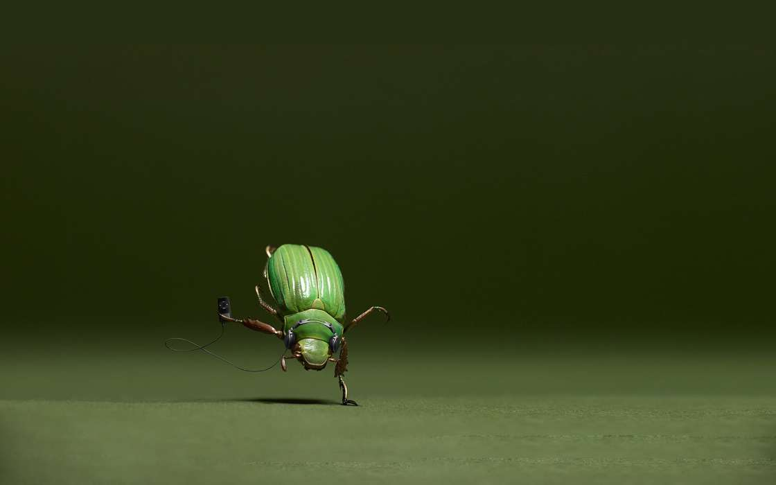 Download mobile wallpaper Funny, Music, Insects for free.