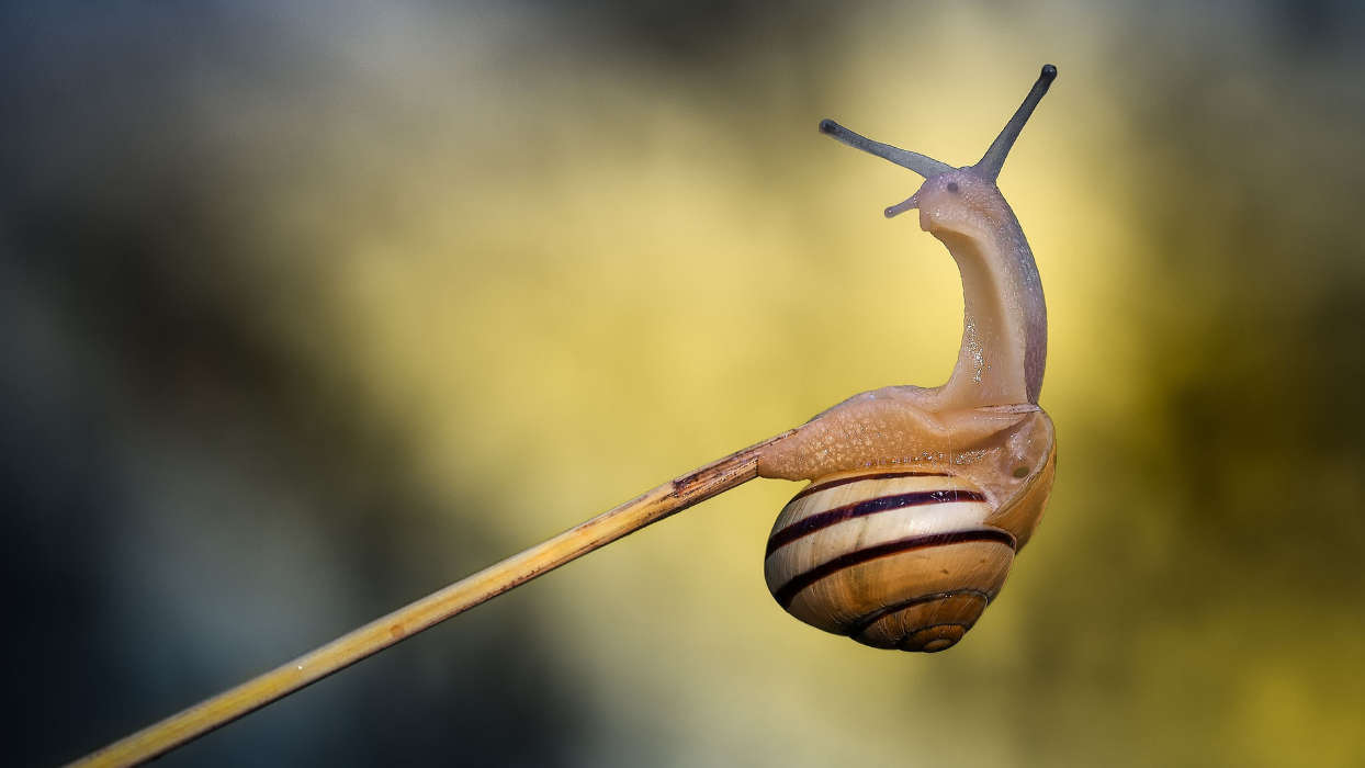 Download mobile wallpaper Insects, Snails for free.
