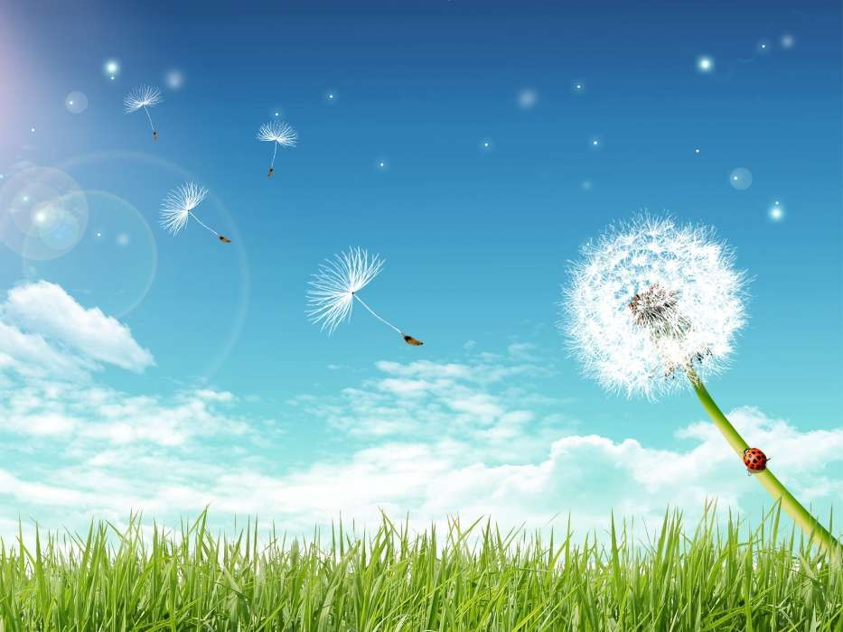 Download mobile wallpaper Plants, Landscape, Sky, Dandelions, Pictures for free.