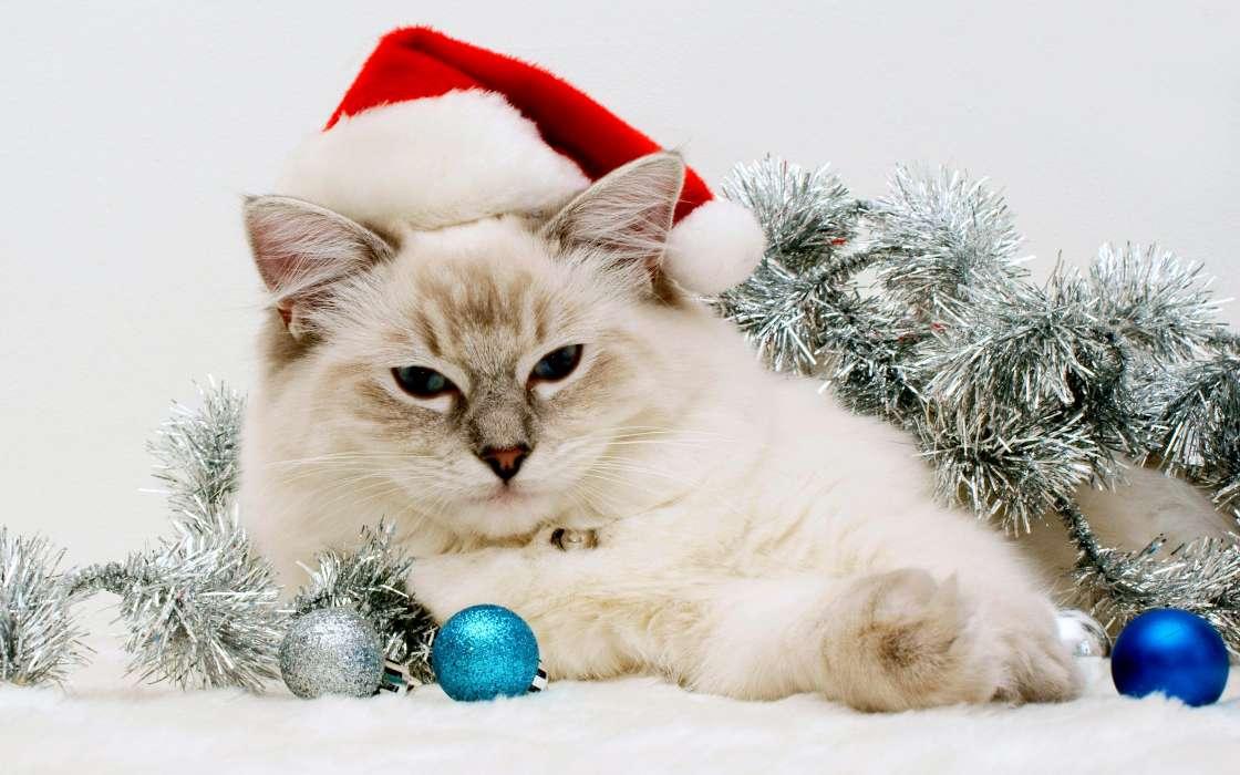 Картинки с новым годом с кошками, высказывания анекдоты