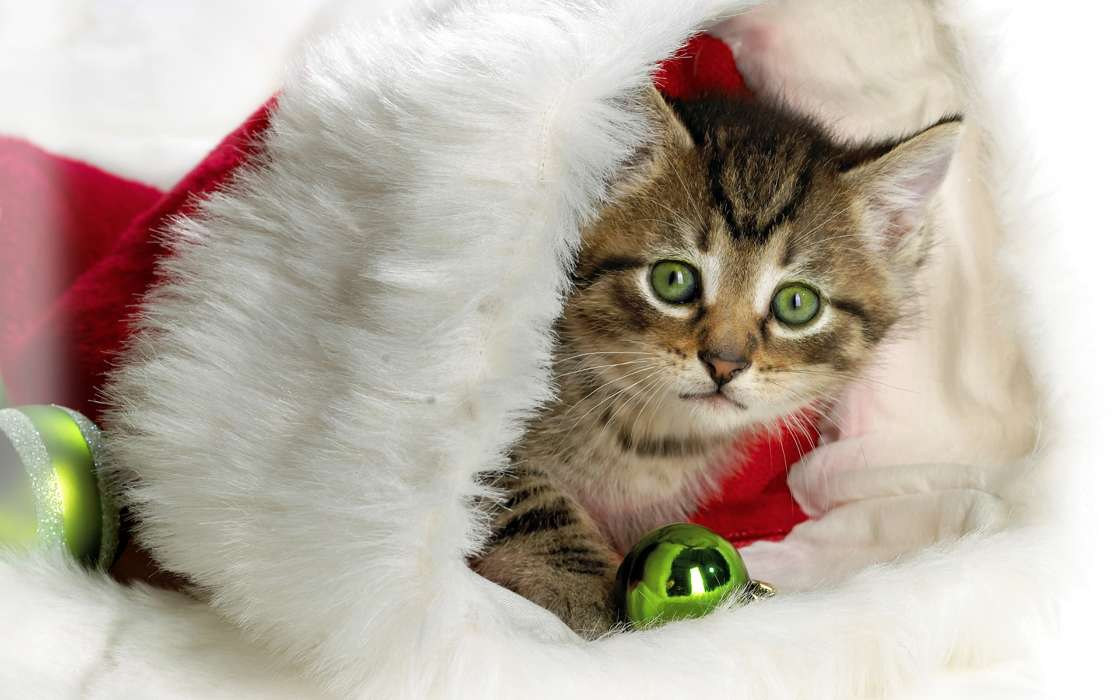 Download mobile wallpaper Holidays, Animals, Cats, New Year for free.
