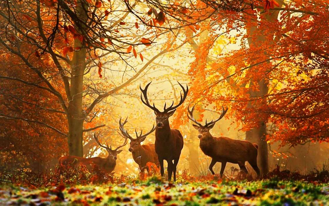 Download mobile wallpaper Animals, Autumn, Deers for free.