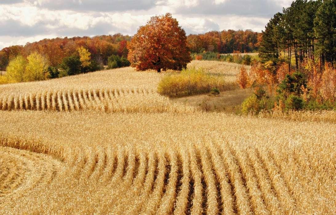 картинки осень поле сидела