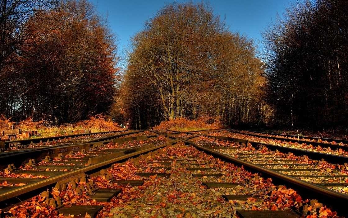 Скачать картинку на телефон: Пейзаж, Природа, Осень ...