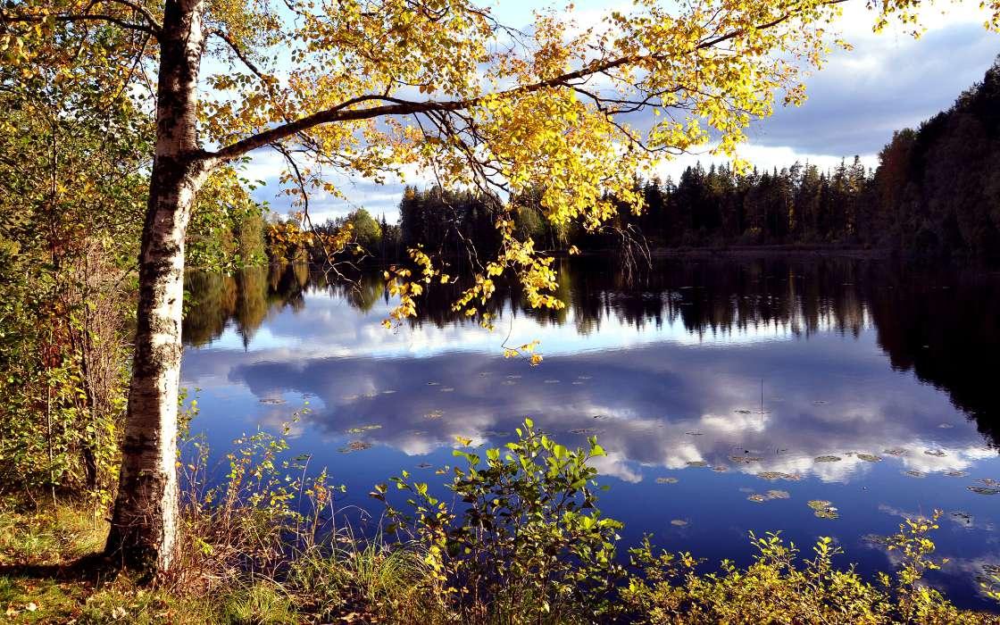винограда картинки русских пейзажей на телефон ли, летом