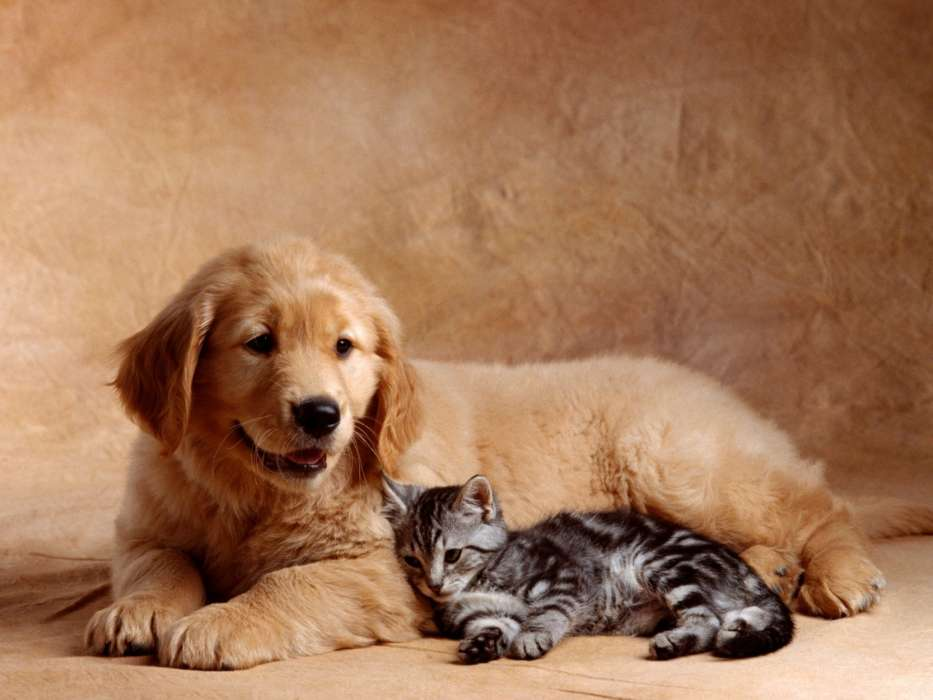 Картинка собаки и кошки вместе