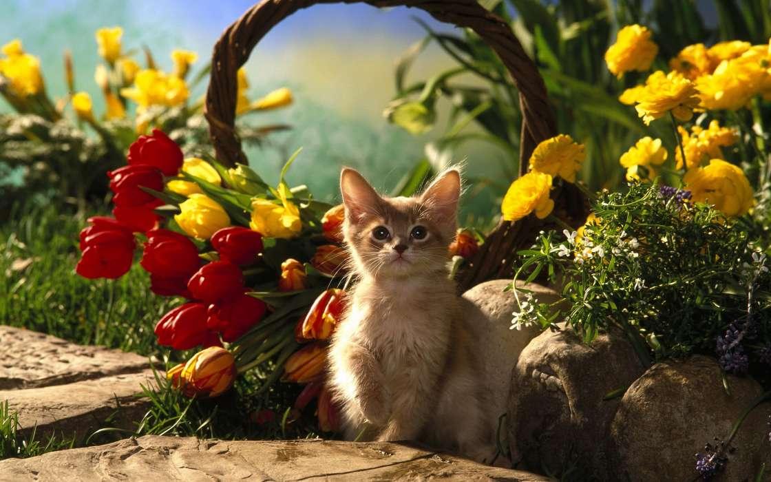 Картинки природа животные цветы, дню рождения