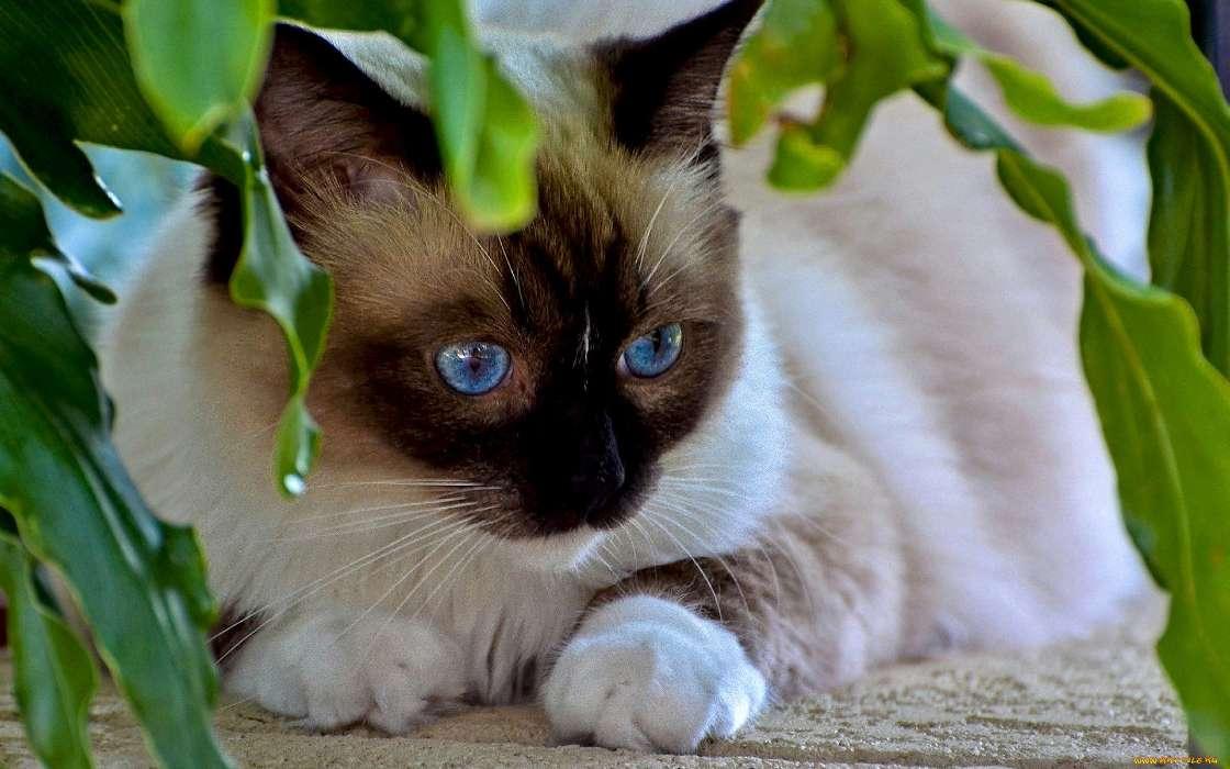 Download Bilder für das Handy: Tiere, Katzen, kostenlos. 28305