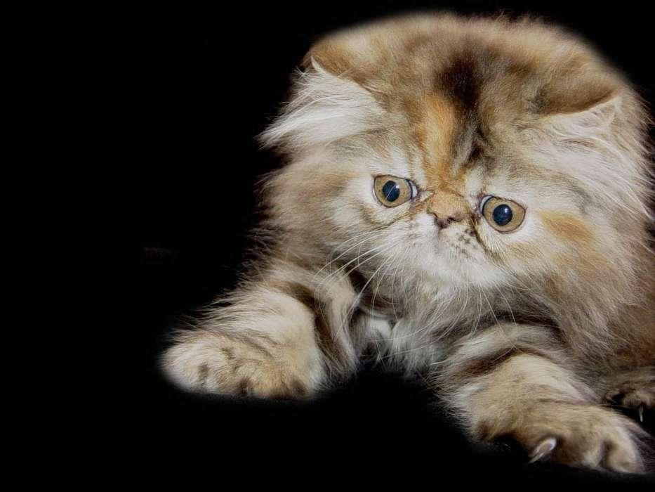 Download Bilder für das Handy: Tiere, Katzen, kostenlos. 29233