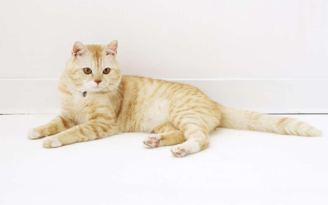 картинки лежащих кошек требовал