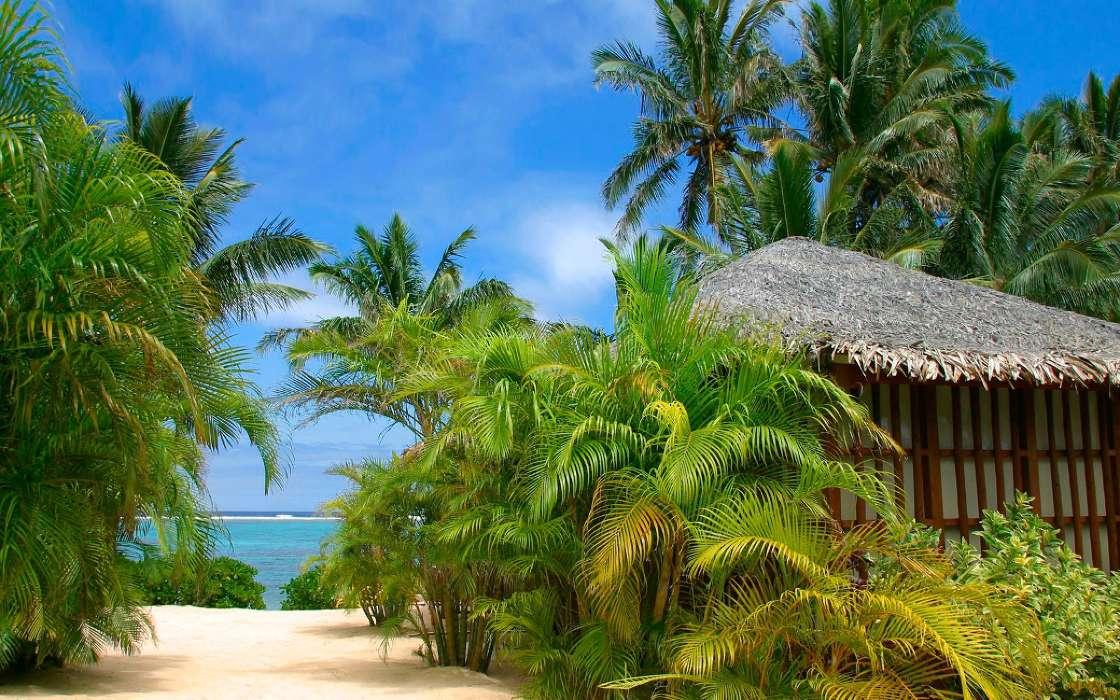 фото пальма тропики занятия