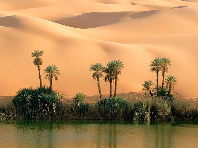 Download mobile wallpaper Landscape, Nature, Palms, Desert for free.