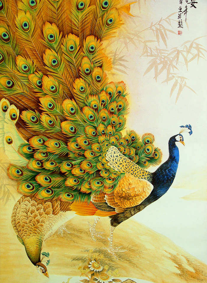 Download Mobile Wallpaper Animals Birds Pictures Peacocks Free 9411