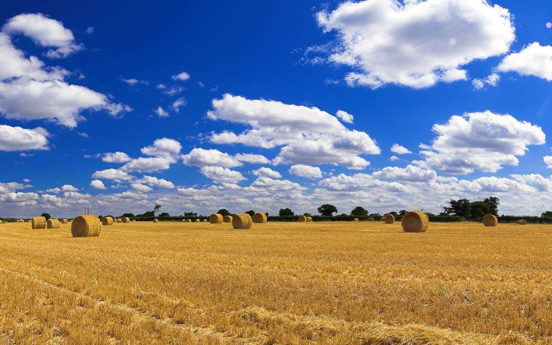 Download mobile wallpaper Landscape, Fields for free.