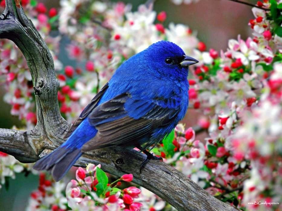 download bilder für das handy tiere blumen vögel