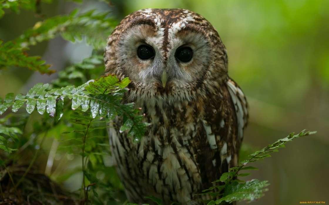 Außergewöhnlich Download Bilder für das Handy: Tiere, Vögel, Eule, kostenlos. 15312 &UQ_03
