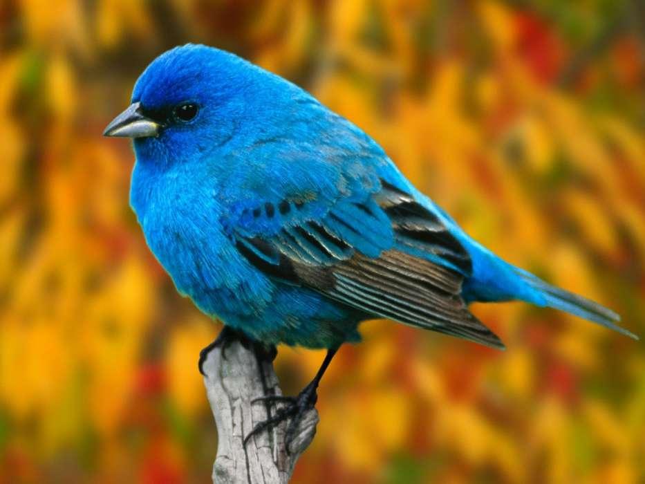Изображение птиц на фото картинках