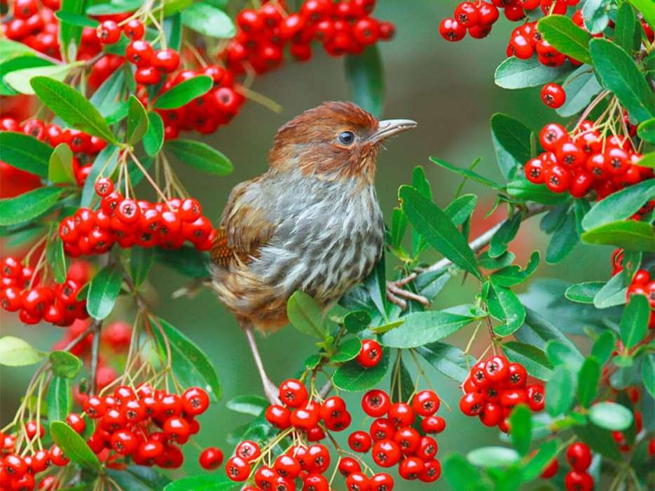 Сынок день, день птиц картинки для детей