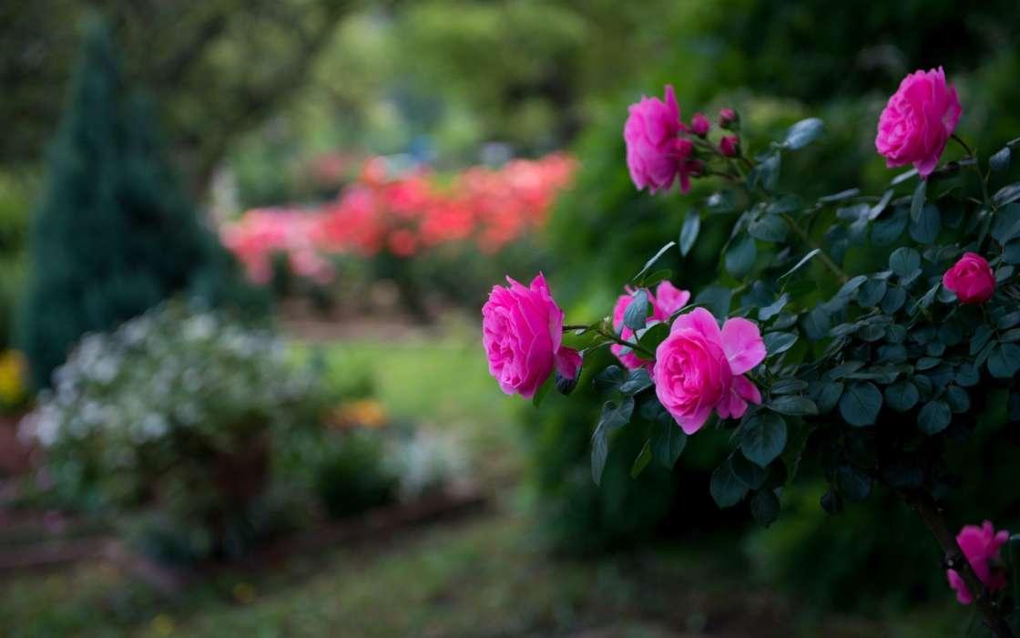 Красивые картинки с природой и цветами на телефон, июня-день