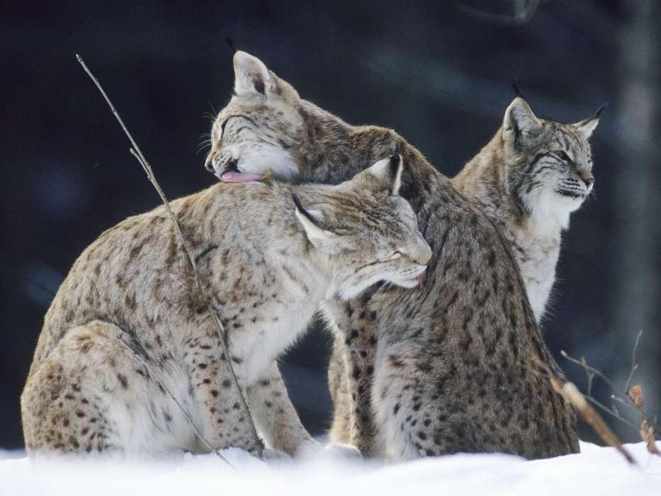 Картинки зима животные любовь, картинки мир