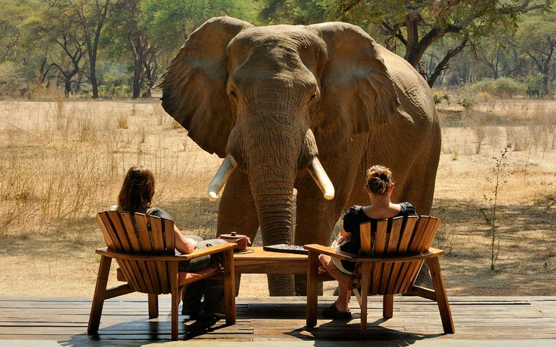 Приколы картинки слоны, всем приветик зимний