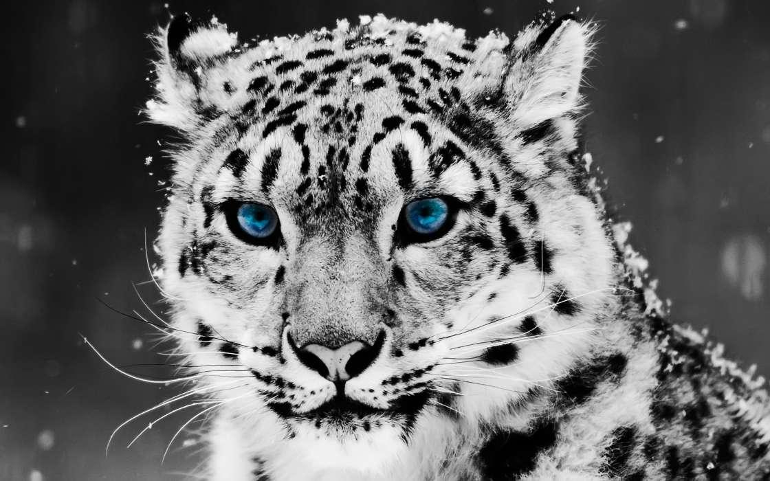 Schöne hintergrundbilder von tieren